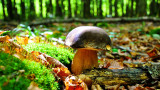 mushroom-g05c0eb50a-1920-3126454