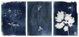 thumbnail-cyanotype-triptique-2-3126336