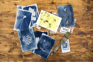 thumbnail-pres-atelier-cyanotype-photogram-3126332